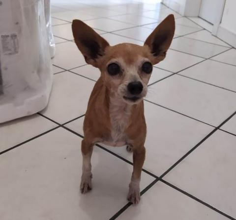 Cão resgatado está em posto da PRF em Itapema   Notisul - Um Jornal de Verdade - Portal Notisul