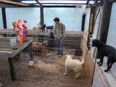 Os cães estão abrigados provisoriamente no Horto Municipal. Veterinários podem fazer atendimento voluntário.