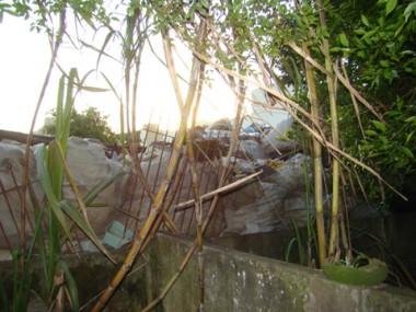 Os proprietários da empresa Rosa Martins recolhem mais de 40 toneladas de lixo reciclável por mês.