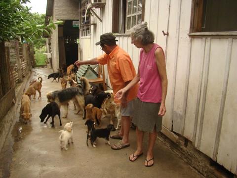 Maria Amélia e José cuidam na própria casa de cães abandonados
