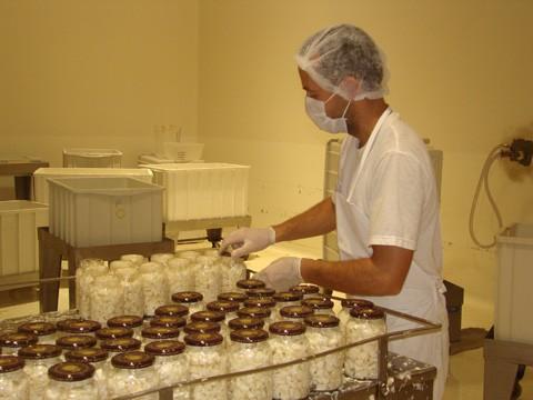 Os produtores de palmito que integram a Cooperativa Agropecuária de Tubarão (Copagro) estão espalhados pela região de Tubarão, Vale do Itajaí e grande Florianópolis.