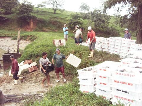Só na semana passada, 50 toneladas de tilápia foram retiradas das propriedades do piscicultor Mário Wensing.