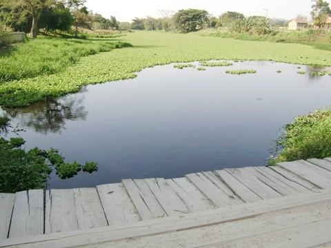 Atualmente, existem pelo menos 19 pontes irregulares construídas ao longo do Rio da Madre, em Tubarão. A da foto fica na comunidade de Praia Redonda.