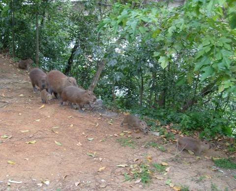 Dar atenção aos animais silvestres será uma forma de cuidar da estabilidade natural de toda a Amurel.