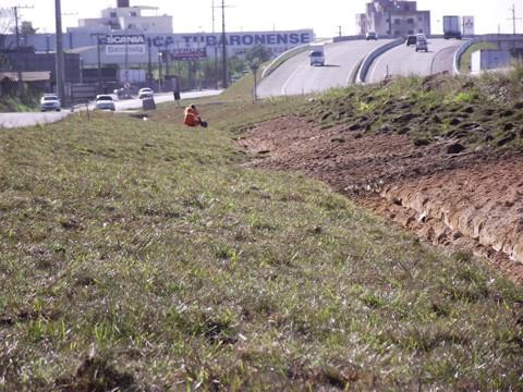 A  cobertura de gramas nos viadutos evitará a erosão do solo