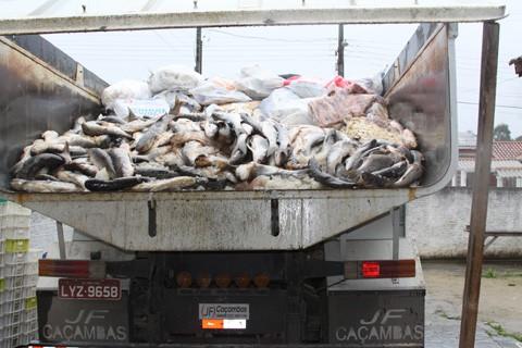 Em uma empresa foram apreendidos 13,390 mil quilos de pescados, que serão transformados em ração