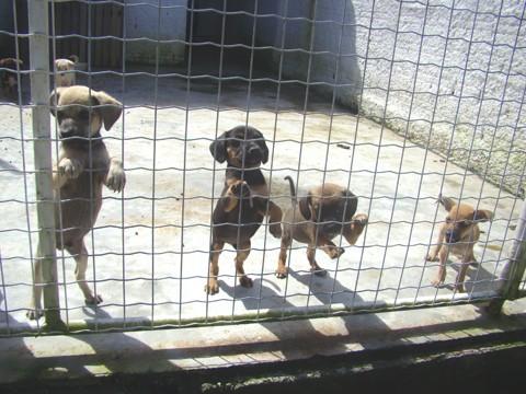 Hoje, cerca de 80 cães estão no CCZ, muitos deles filhotes abandonados no local
