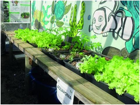 O sistema trata-se de produção agroalimentar que integra a aquicultura com a hidroponia  - Foto:Divulgação/Notisul