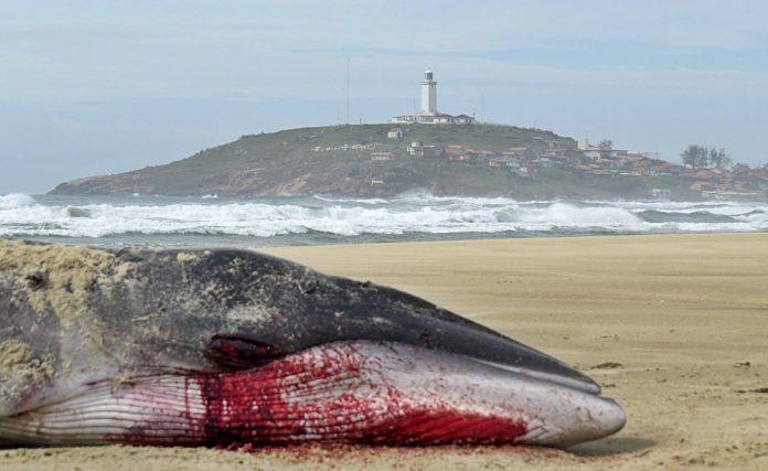 A causa da morte do filhote será investigada - Foto: João Baiuka/Divulgação