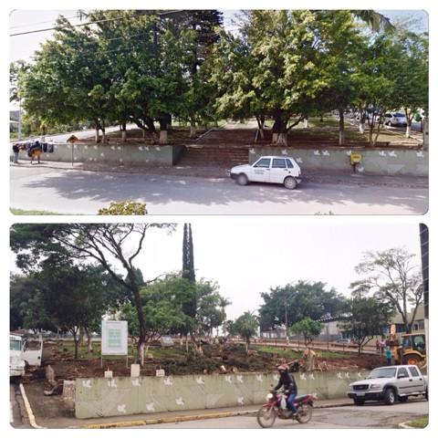 Além das árvores podadas, ninhos de pássaros e  bromélias foram destruídas  -  Foto: Gabriel Felipe/RBS TV/Divulgação/Notisul