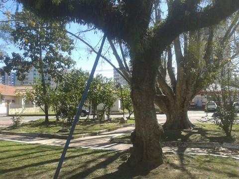 Avaliação das árvores nas praças oferece mais segurança à população  -  Foto:Kalil de Oliveira/Notisul