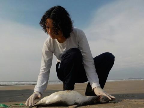 Se o animal está muito debilitado, a garantia de salvá-lo nem sempre é possível -  Foto:Divulgação/Notisul