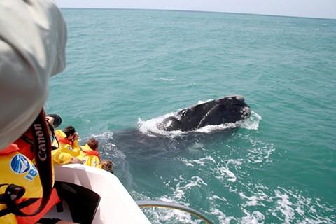 Turistas já podem avistar animais a poucos metros. - Foto: Grupo Vida, Sol e Mar/Divulgação/Notisul.