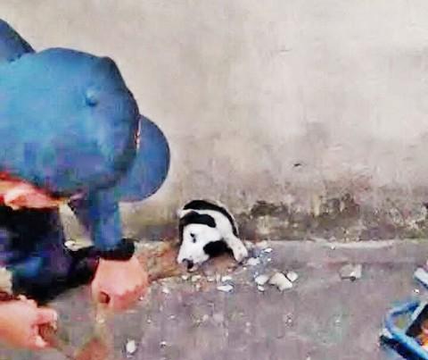 Cachorrinha ficou horas entalada em um buraco de saída d'água em um muro, em Imbituba  - Foto:Divulgação/Notisul
