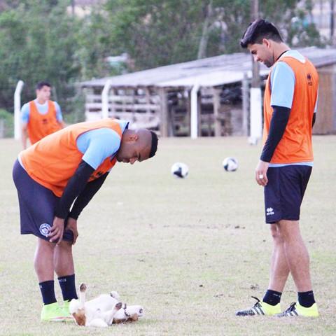 Elenco do Tricolor fez o último treino na manhã deste domingo  -  Foto:William Lampert/Divulgação/Notisul