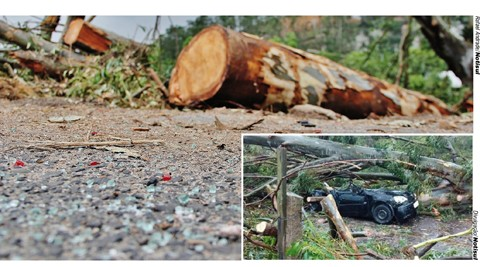 Árvore de mais de 30 metros foi cortada em pedaços e ficou à margem do local do acidente