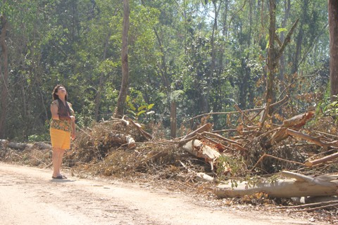 Izabel Citadin observa os rastros deixados pelo temporal em sua propriedade localizada em Treze de Maio  - Fotos:Lysiê Santos/Notisul