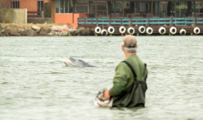 Laguna é considerada a Capital Nacional do Boto Pescador  -  Foto: Matheus Henckmaier/Divulgação/notisul
