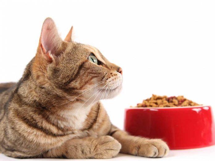 Alimento para gatos sensíveis - Foto: Divulgação/Notisul