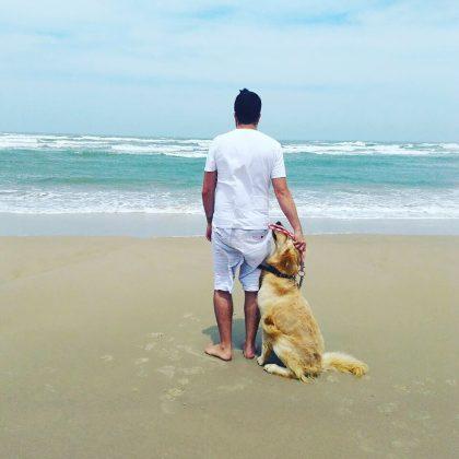 O destaque desta semana é o Apollo, um Golden de 4 anos de vida. Seu papai, Jayme Mattos, contou-me que ele adora passear, brincar com bolinhas e curtir uma praia. Muito fofo! - Foto: Divulgação/Notisul