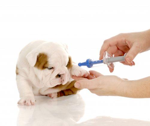 Cães diabéticos: conheça os sintomas e os cuidados necessários