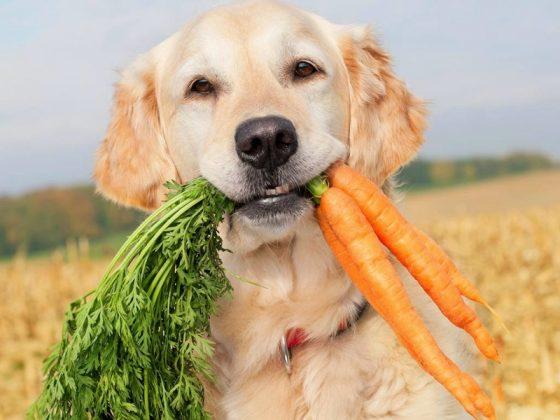 Benefícios dos legumes para cães