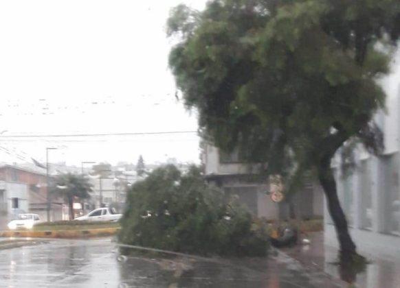 Árvores caíram nas ruas de Xaxim