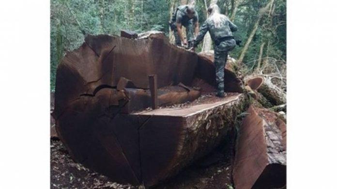 Foto: Polícia Militar Ambiental