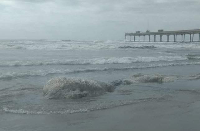 #Pracegover Foto: na imagem há o mar e uma baleia em estado de decomposição