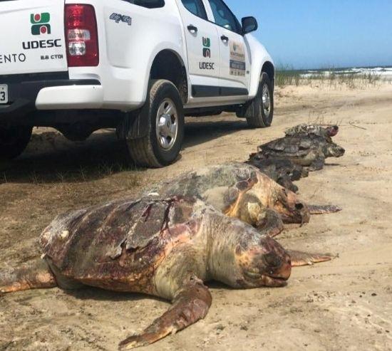 #Pracegover Foto: na imagem há um veículo e algumas tartarugas mortas