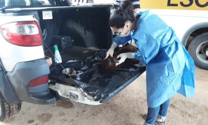 #Pracegover Foto: na imagem há uma mulher de máscara, um animal e dois veículos