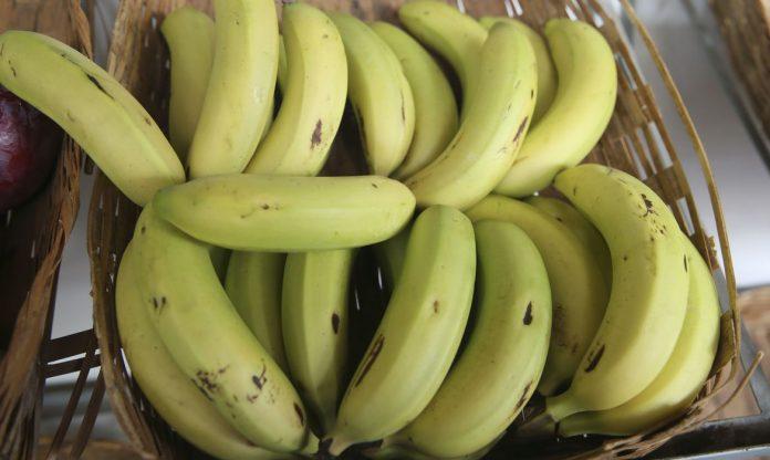 #Pracegover Foto: na imagem há muitas bananas
