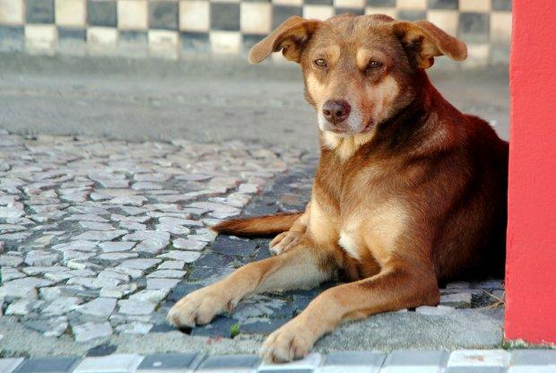#Pracegover Foto: na imagem há um cão