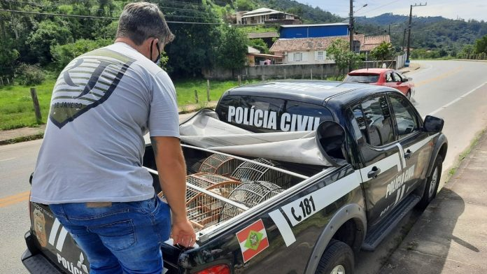 #Pracegover Na foto, um homem colocando gaiolas em um carro