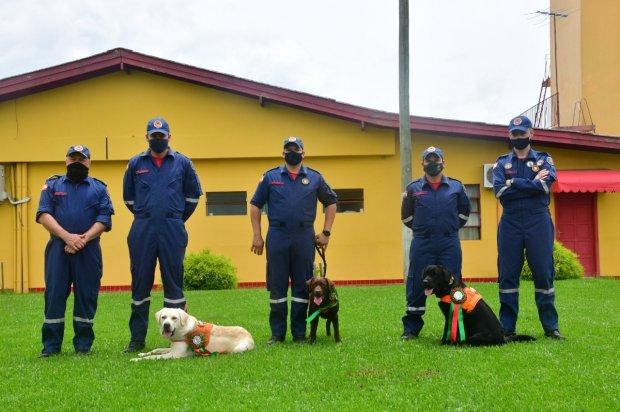 #Pracegover Foto: na imagem há três cães, cinco bombeiros e uma casa