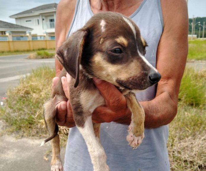 #Pracegover Foto: na imagm há um homem de camiseta cinza segurando um cãozinho