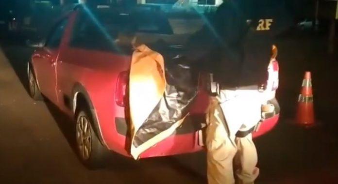 #Pracegover Na foto, um policial da PRF inspeciona a caçamba de veículo onde estão os camarões.
