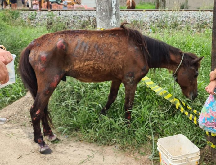 #Pracegover Foto: na imagem há um cavalo, pasto e um balde de água