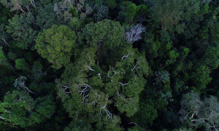 #Prcegover Foto: na imagem há muitas árvores