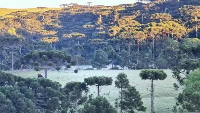 #Pracegover Na foto, paisagem verde Serra coberta pela geada