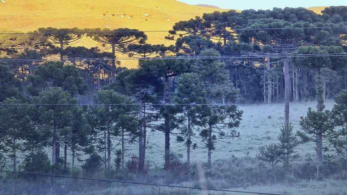 #pracegover Na foto, paisagem serrana coberta de geada em pleno fevereiro de 2021