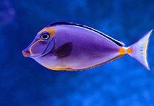 #Pracegover Foto: na imagem há o signo de peixes