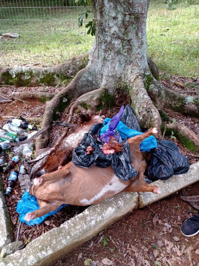 #Pracegover Foto: na imagem há uma árvore e animais