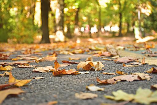 #ParaCegover Foto: na imagem há folhas de árvores no chão e árvores no local