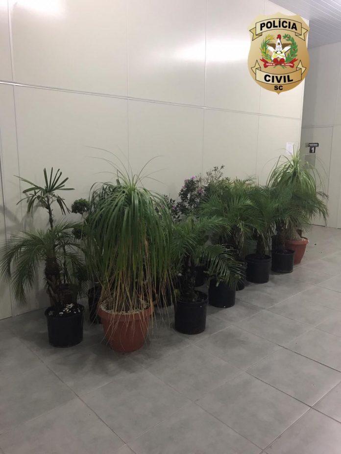 #Pracegover Foto: na imagem há plantas