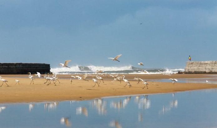 #Pracegover Na foto, banco de areia, água e pássaros
