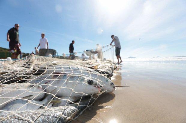 #Pracegover Na foto, homens na beira da praia durante a pesca de arrasto