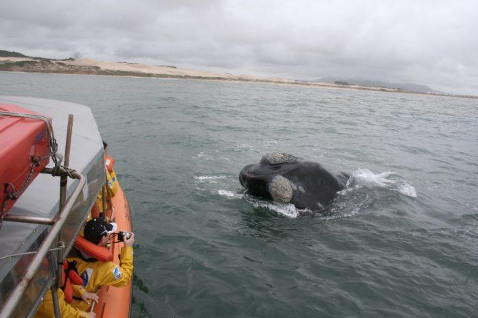 #Pracegover Na foto, embarcação com pessoas avistando uma baleia