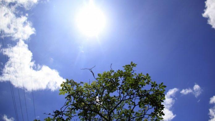 #Pracegover Na foto, céu claro com presença de sol e pouca nuvens, detalhe para copa de uma árvore com folhas verdes
