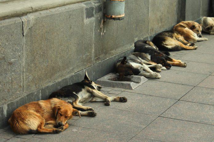 #Pracegover Foto: na imagem há vários cães deitados na calçada